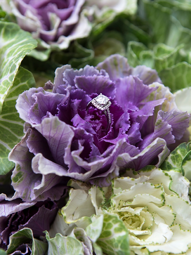 Gorgeous wedding ring shot in purple farm kale!