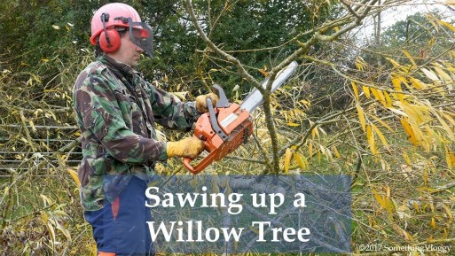 What to do with a Fallen Willow Tree