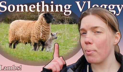 A Day In The Life Of Lambs – Spring 2018