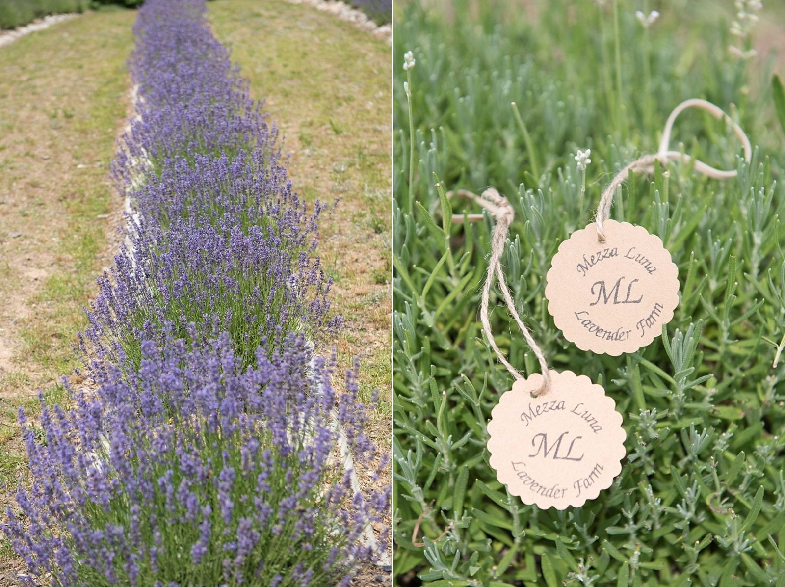 Flower Field Lavender Farm Raleigh North Carolina
