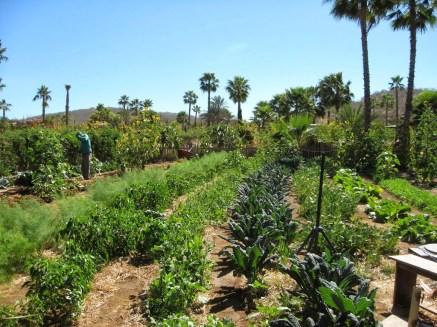 Flora Farms: Gardens