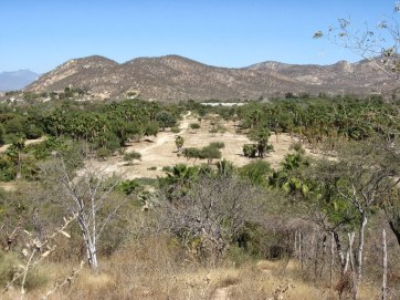 View During Walk to Los Tamarindos