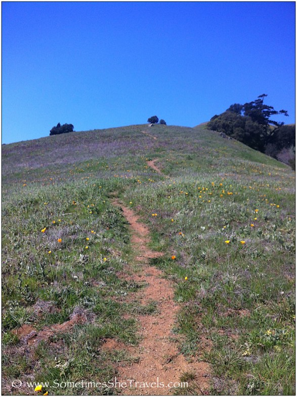 Trail up hill with flowers