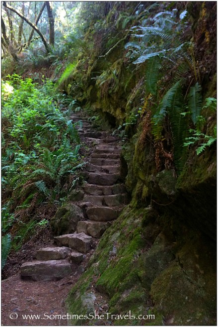 Stone stairway lined with ferns and mossy rocks
