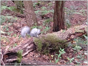 We saw two of the most beautiful gray squirrels I've ever encountered.