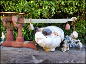 piggy bank sunglasses