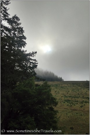 Tree-covered foggy dam