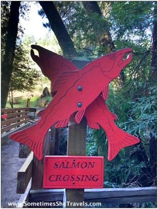 Beautiful salmon crossing sign. We looked for Salmon in Barnabe Creek but did not see any.