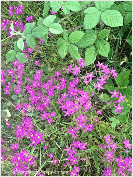 Day 6: Purple Flowers