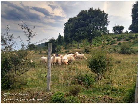 Herds of sheep made for charming bucolic scenes.