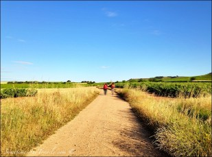 camino de santiago pilgrims on road through fields 2