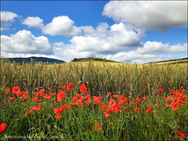 camino de santiago poppies fields sky