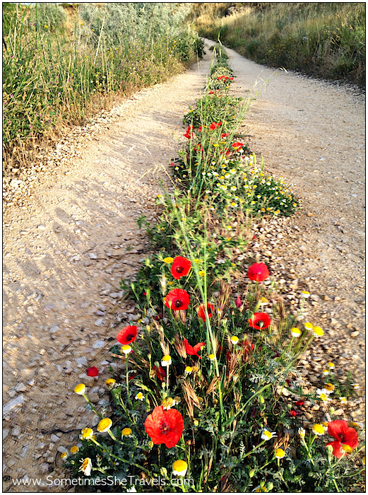 Camino de Santiago: Poppies on Path