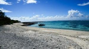 Lady Elliot Island a delightful coral cay