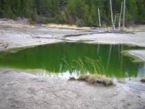 Bacteria-tinted pond, Yellowstone, USA