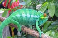 Chameleon 2, Madagascar