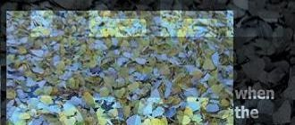 Yellow6: When The Leaves Fall Like Snow (Make Mine Music, 2008)