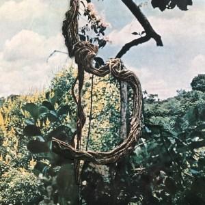Celer + Forest Management: Landmarks (Constellation Tatsu, 2018