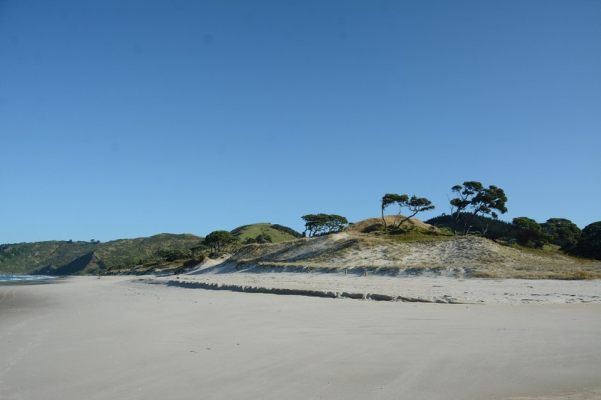 trees on Pakiri beach