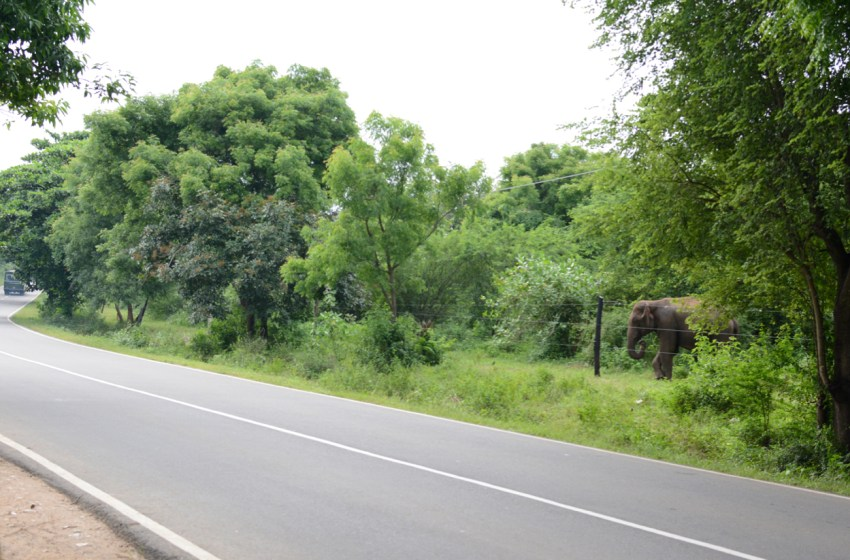 elephant near the road
