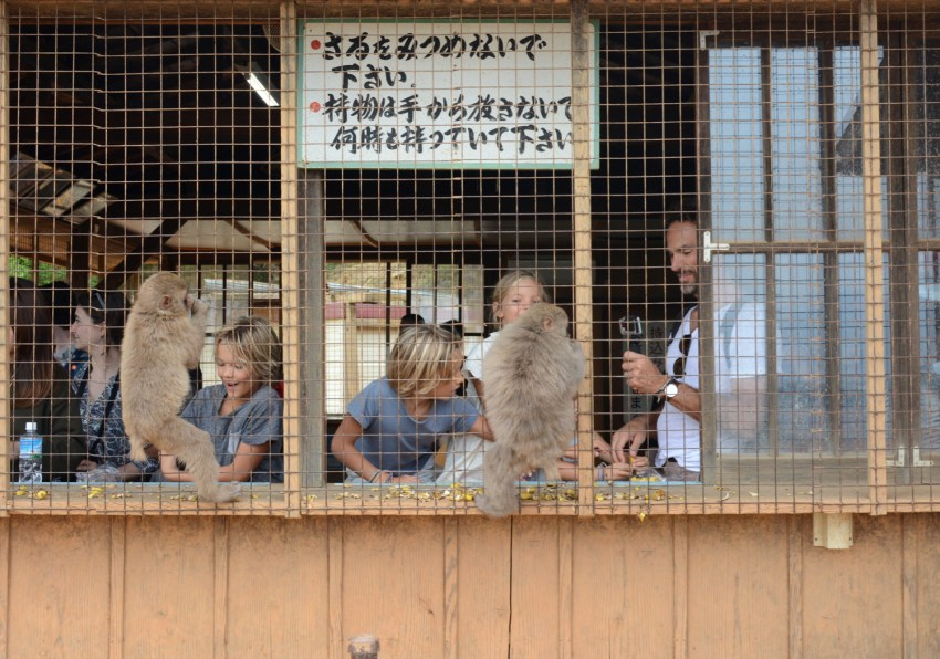 feeding monkeys in MOnkey Park Kyoto