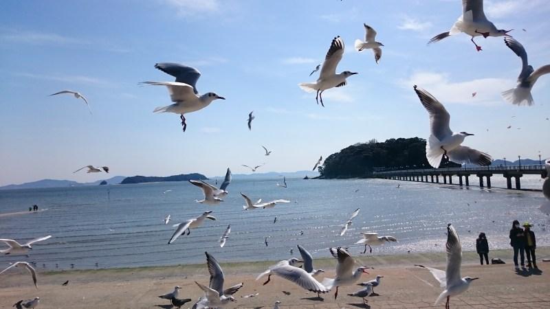 蒲郡 竹島