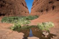 """Petits """"spring waters"""" acompanyen en la sequera del desert"""
