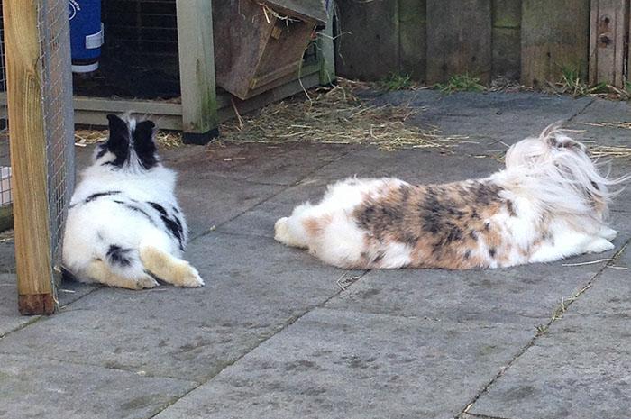 konijnen6
