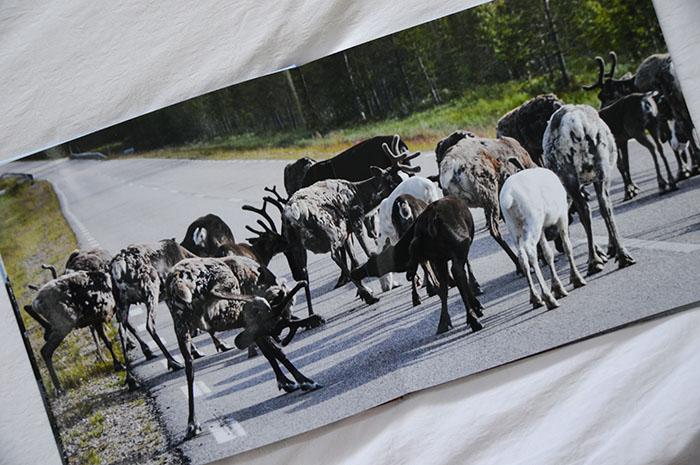 Fotoboek Zweden Webprint 3