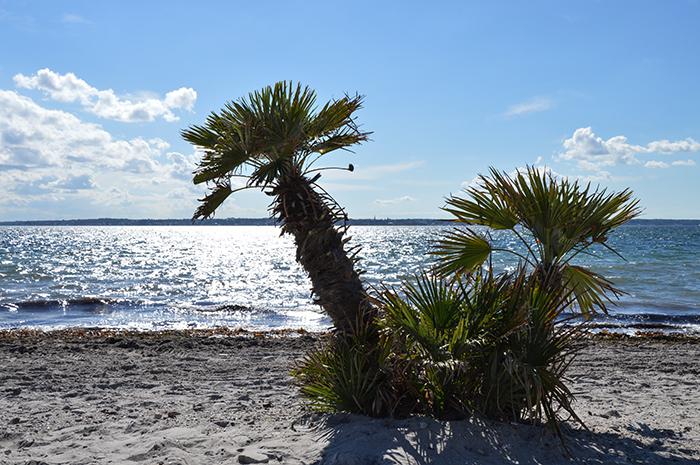Photo Diary 19 palmbomen