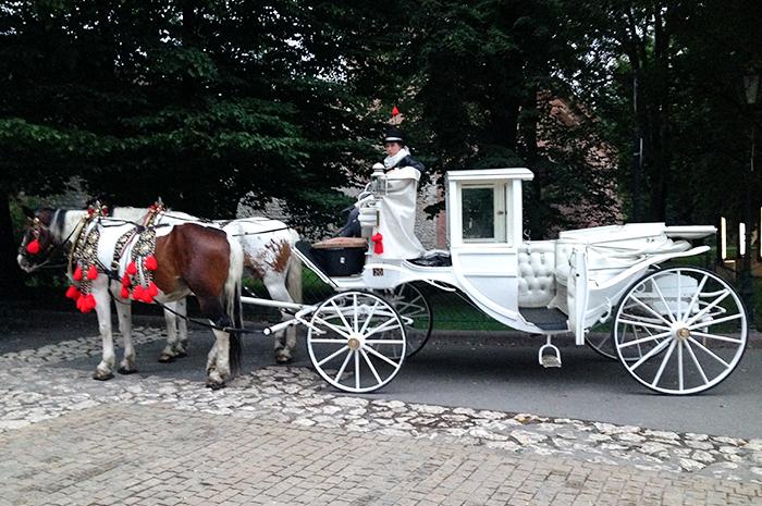 Roadtrip Krakow paard
