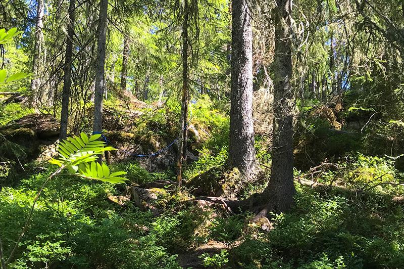 Trollfoss waterval wandeling