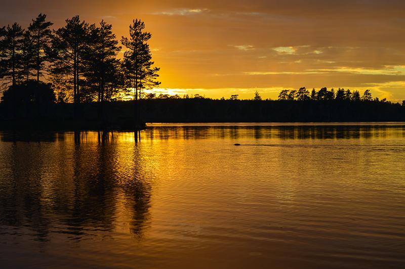 Met de kano op beversafari in Dalarna zonsondergang