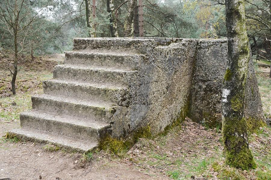 Wandelen in Nationaal Park Veluwezoom Teerose II