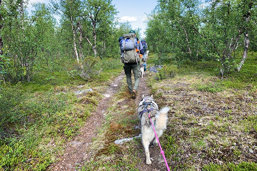 Wandelen met husky's - eerste ervaring met cani-hiken