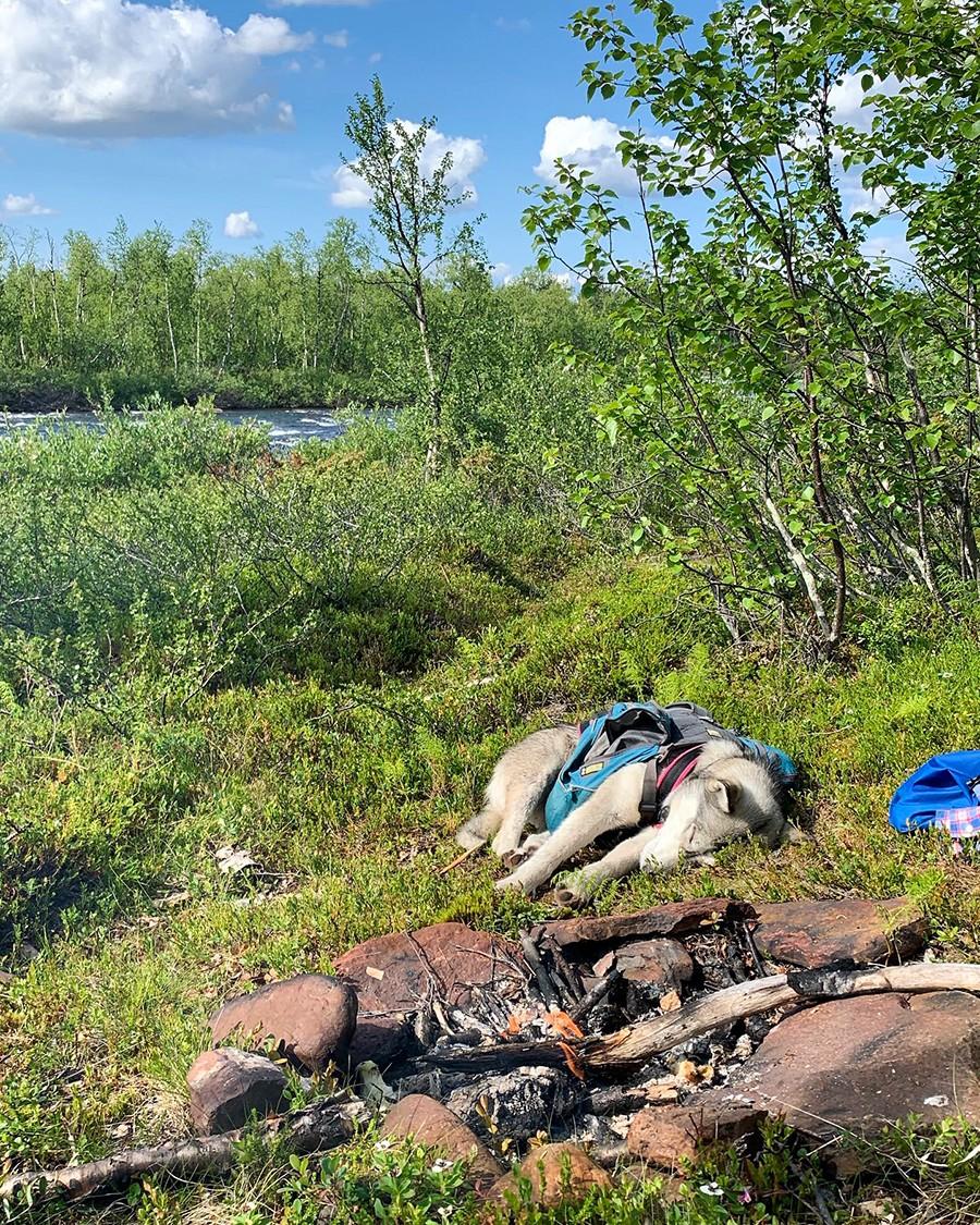 Wandelen met Husky's - even rusten aan het water