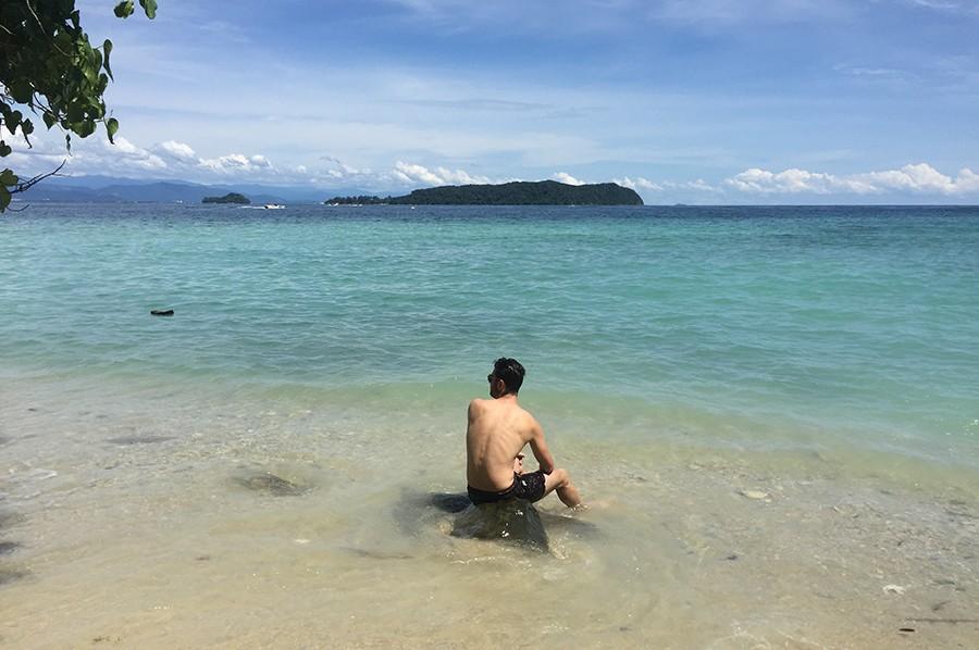Sapi Borneo - sommarmorgon.com