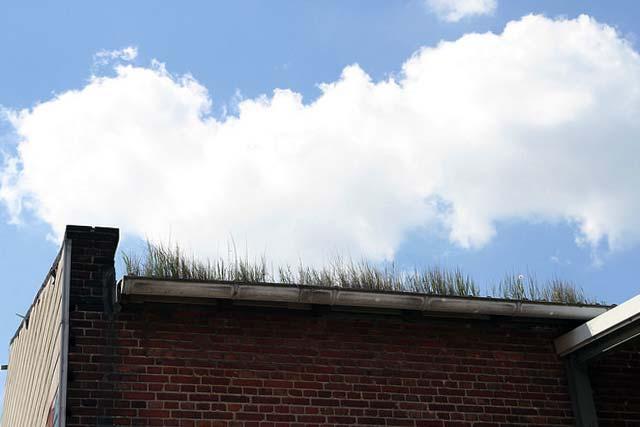 Dachfenster in Dach mit Dachbewuchs