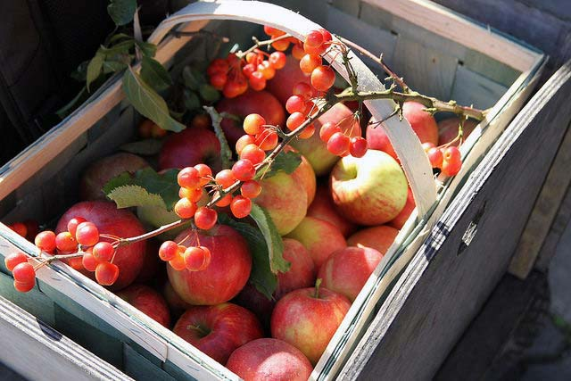 Apfelkiste im Herbst
