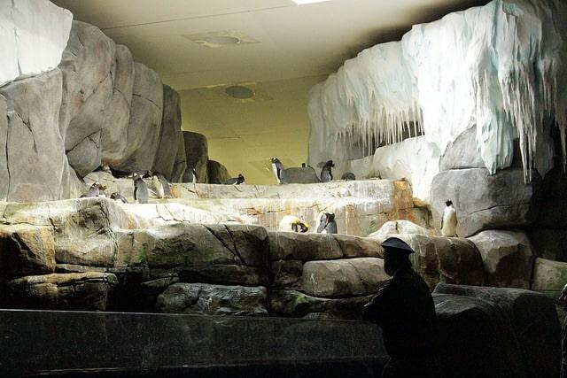 Eismeer in Hagenbeck mit Pinguinen
