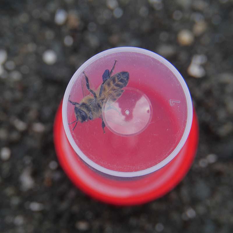 Biene GEO Tag der Natur in Hamburg