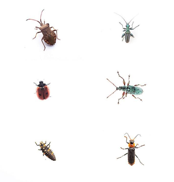 Insekten GEO Tag der Natur in Hamburg