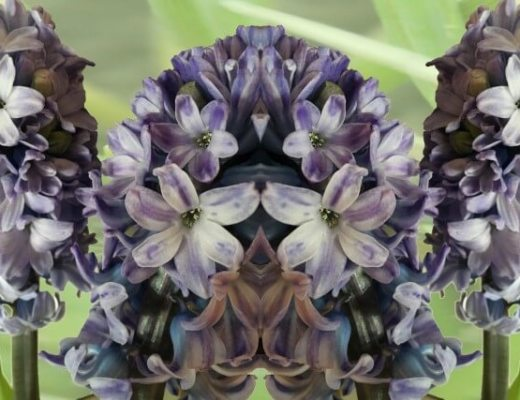 genbrug hyacintløg