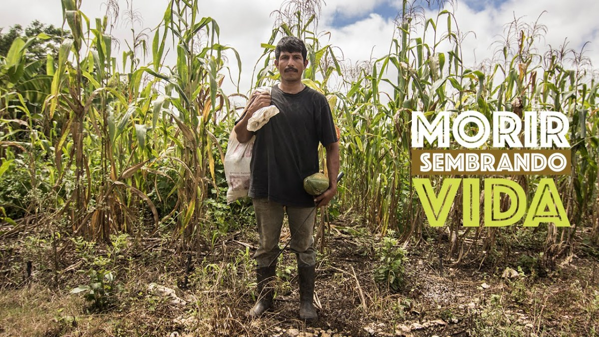 MORIR SEMBRANDO VIDA – DOCUMENTAL