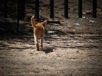 МачЕто си отива :)