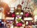 David Jones Spring Flower Festival