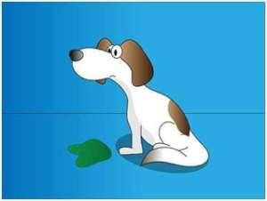 vomitos perro 2