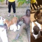 Thieves flogged for stealing a goat in Gombe State (Photos)