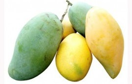 INTERESTING!! See What will Happen If You Eat A Mango Every Day
