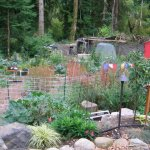 A working permaculture garden